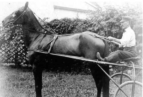 crystle_w_h_sr_with_horse.jpg (296964 bytes)